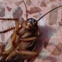 Jak se zbavit švábů, štěnic a dalšího nebezpečného hmyzu v bytě?