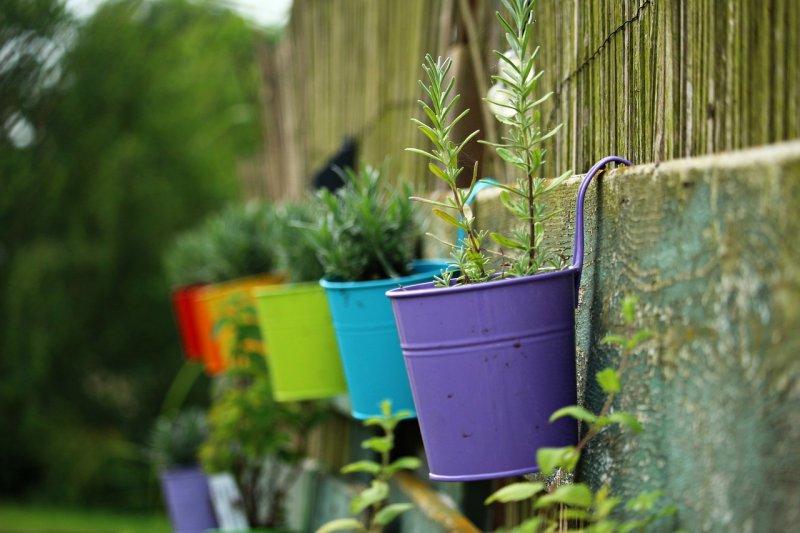 květináče, zahrada, pěstování rostlin vkvětináčích