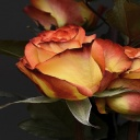 Růže vadnou, když je máte ve společnosti ovoce