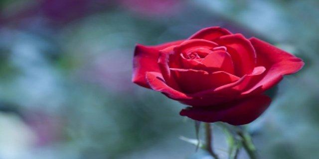 láska, muži, ženy, romantika, svátek zamilovaných
