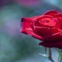 Láska, to není jen svátek zamilovaných