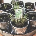 Jak ochutit jídlo malým dětem? Používejte bylinky!