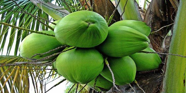 kokosový olej, péče odítě, zdraví dětí, přírodní pátky pro zdraví