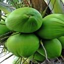 Kokosový olej na žaludeční problémy, ale i proti vším