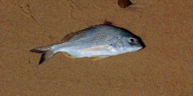 Ryby vdětském jídelníčku mohou snížit výskyt ekzému