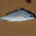 Ryby v dětském jídelníčku mohou snížit výskyt ekzému