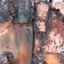 Dřevo - a jeho úprava nejen chemickými prostředky