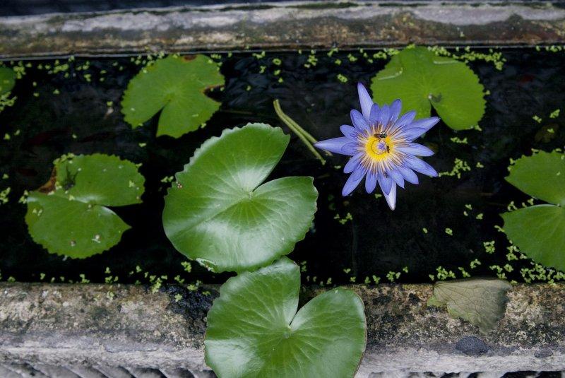 jezírko,. vodní rostliny, balkon, zdraví, relaxace