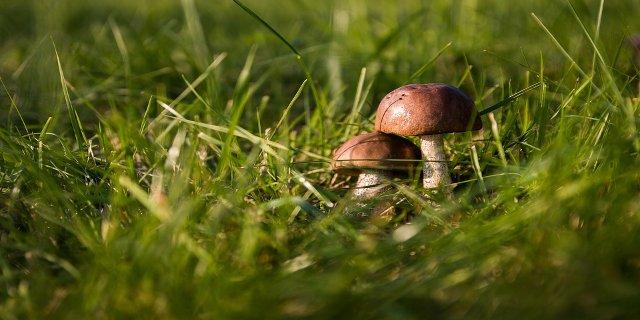 houby, zdraví, houbaři, les, vaření