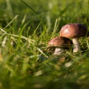 Nejlepší smaženice je z deseti druhů hub