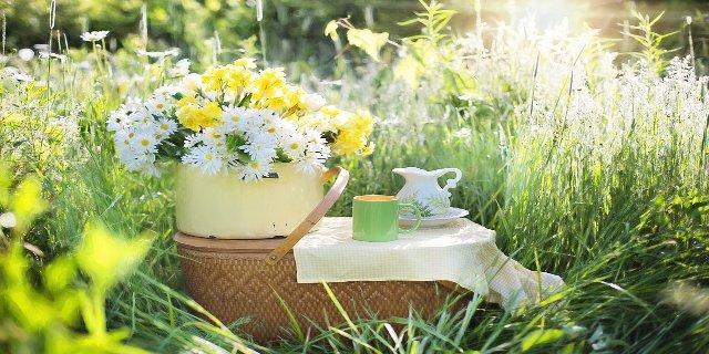 zdraví, piknik, příroda, zdravá výživa