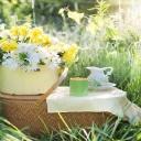 Slunečné dny přejí hodování v přírodě, vyrazte na piknik!