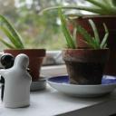 Aloe vera - ideální rostlina do ložnice