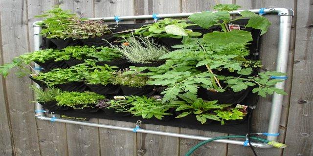 bylinky, vertikální zahrádka, interiér, zdraví, pěstování bylinek