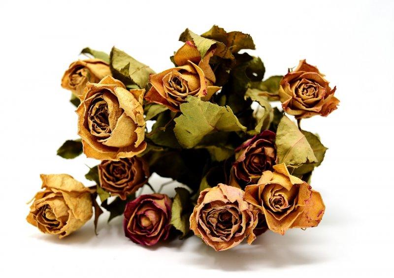 bydlení, dekorace, sušené květiny, vůně