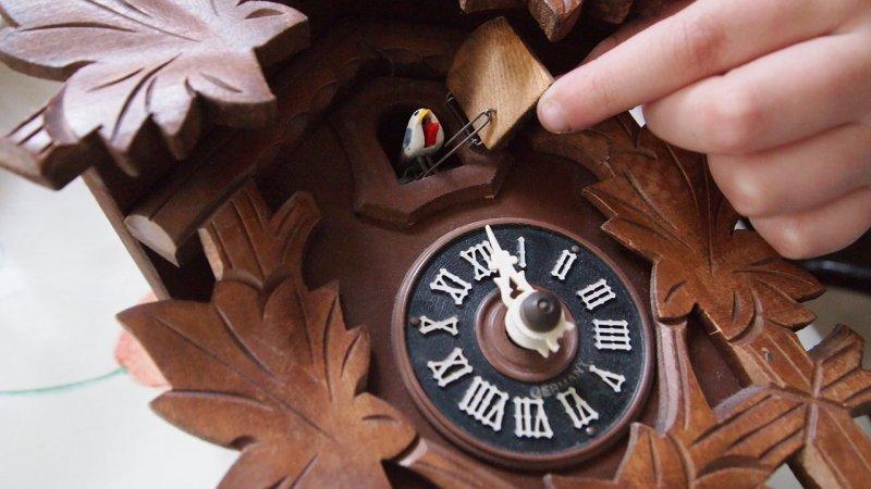 kukačky, hodiny, dřevo, bydlení
