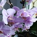Orchidej - manuál pro začátečníky
