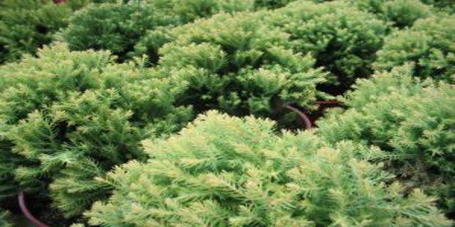rostliny , bydlení, energie zpřírody