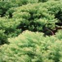 Pozitivní energie z rostlin, pěstovaných v bytě