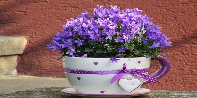 pokojové rostliny, bydlení, pěstování pokojových květin, květináče