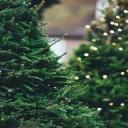 Vánoční stromeček ve stylu glamour či vintage?