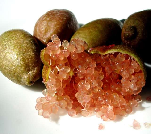 mikrocitrus australica, zdraví, citrusy, vitaminy, pěstování citrusů