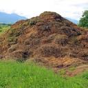 Hnojení čerstvým hnojem není vhodné pro všechny rostliny