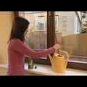 Hnojení pokojových rostlin a sušené květiny - video