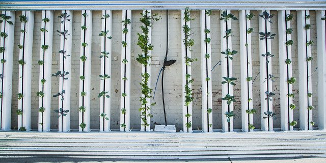zeleň vbytě, pěstování rostlin, hydroponie