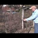 Jak na jarní řez malých ovocných dřevin - video