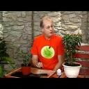 Jak ochránit pokojové rostliny před škůdci - video