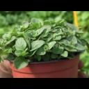 Jak pěstovat bylinky? - video