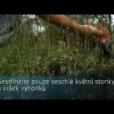 Jak provádět řez levandule - video
