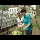 Jak sázet rajčata - video