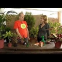 Jak se vypořádat se škůdci v rostlinách? - video