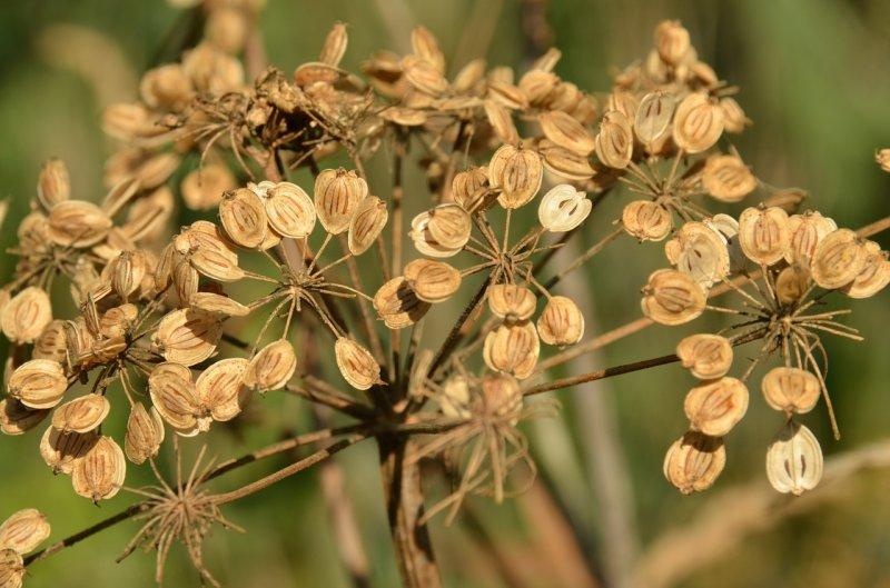 pěstování květin, semínka,rozmnožování květin