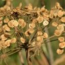 Jak sesbírat a uchovat semínka okrasných květin?