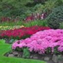 Kdy a jak správně plet zahradu a starat se o trávník - video