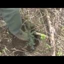 Jak vysadit les - video