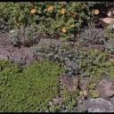 Poradíme vám co vysadit na skalku v zahradě - video