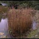 Zazimováníat zahradní jezírko - video