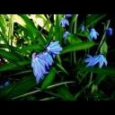 Jaro na zahradě když se začíná probouzet - video