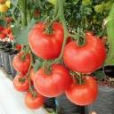 Jednoduché pěstování domácí zeleně, ovoce a zeleniny v hydroponickém roztoku