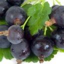 Josta je plná vitaminů, minerálů a navíc výborně chutná