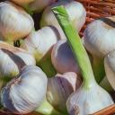 Kdy správně sklidit česnek a cibuli?