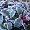 Krásná a nenáročná rostlinka, která zkrásní balkony a interiéry - Libavka shalon
