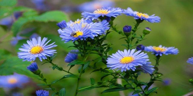 zahrada, modrá, letničky, záhony