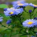 Modrá zahrada, to není halucinace, ale úžasné spojení relaxačních barev