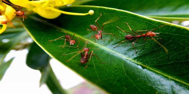 zahrada, mravenci, hmyz, insekticidy, chemie