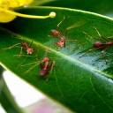 Mravenci na zahradě? Problém, který má více možností řešení!